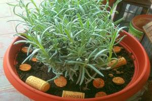 Riciclo Creativo - Fertilizzante