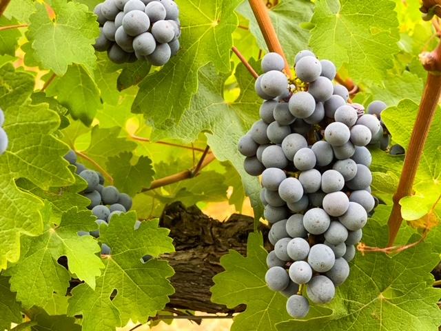 Fattoria Castello di Monteriggioni - Wine Tour - Wine Tasting - Visite e Degustazioni