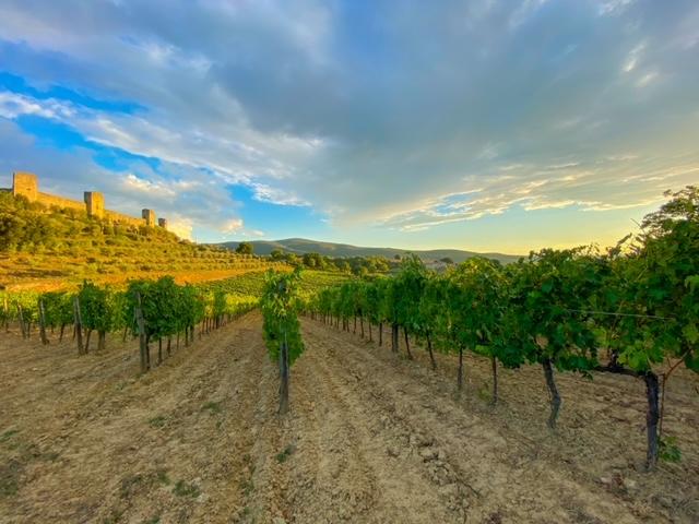 Fattoria Castello di Monteriggioni - Sangiovese Castello di Monteriggioni
