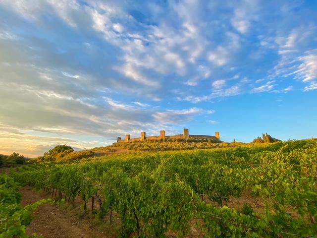 Fattoria Castello di Monteriggioni - Vista Vigneto e Castello di Monteriggioni